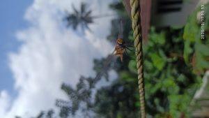 I, the Dragon Fly